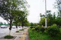 城市绿化和行驶中的汽车