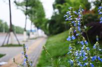 虚化背景的蓝色小花