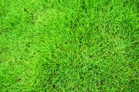 嫩绿的草地