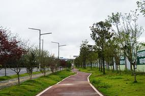 围墙边的绿化步道