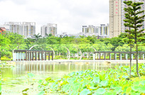 湖泊公园风光图片