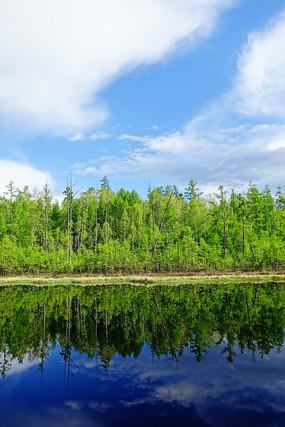 清澈湖泊树林