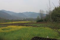 山间小村油菜花自然景观