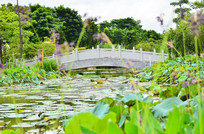 湿地公园小桥风景图片