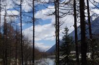 树林深处的湖泊