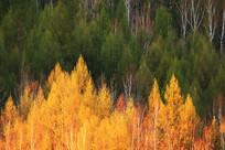 夕阳下的树林风景