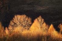 夕阳照射下的树林风景