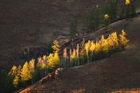 夕照山坡树林