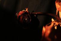 干枯的红玫瑰