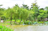 湖泊公园树木风景图片