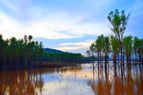 蓝天下长在湘江水里的树