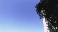 万里无云的蓝色天空和绿树高楼