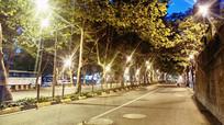 梧桐树下的夜景
