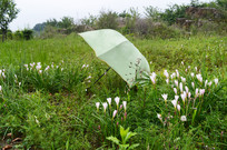 花朵和雨伞