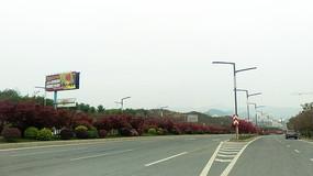 公路边的广告牌和红枫树绿化带