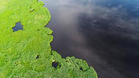 湖岸沼泽水草