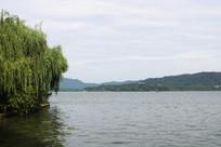 西湖杨柳素材