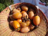 丰收的柿子