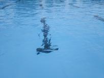 游泳池倒影