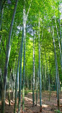 竹林高清摄影图片