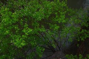 雨中青透的树木枝叶