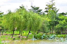 湖边的植物