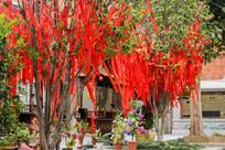 晋江五店市许愿树