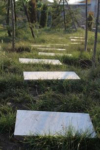 绿草丛中的石板小路