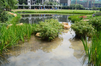 公园里的湖水和绿化