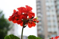 娇艳欲滴的鲜花