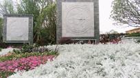 公园石艺和白色叶子的植物