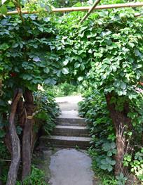 绿植盘绕的门口