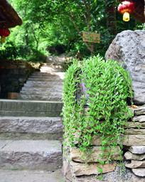 绿植盆景装饰