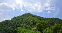 山岭上的茂密植被