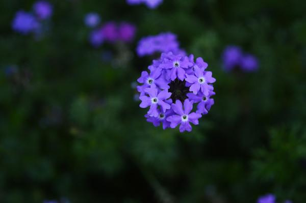 虚化背景的紫色花朵