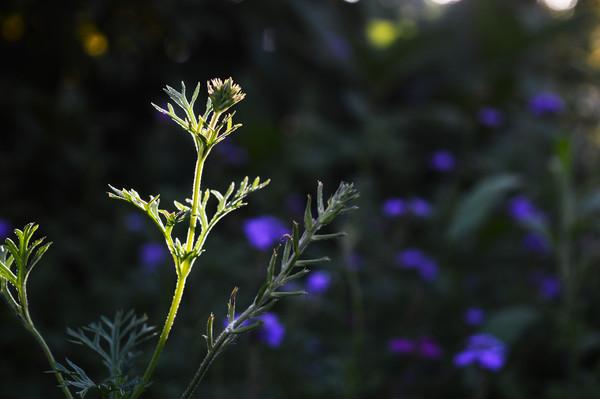 阳光下的小花小草