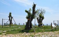 景观树种植