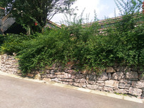 景区路边绿化植物
