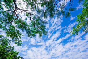 蓝天白云和树木