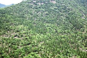 山上种植的绿色树木