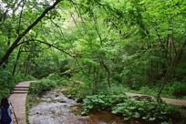 树林里的河流风景