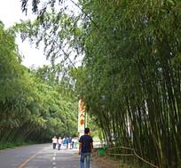 重渡沟竹林风景