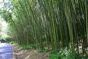 竹林风景图片