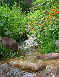 草丛中的小河流水