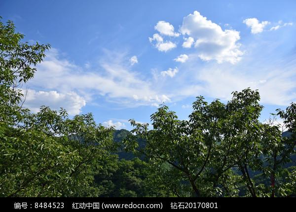 绿色树木和蓝天白云图片