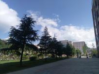 校园里的树木