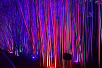 彩灯照射的竹林景观