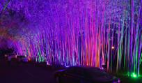 彩色的竹林景观