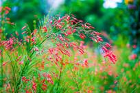 公园里的花