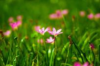 公园里的小红花